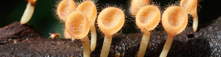 Pilze in Reihe